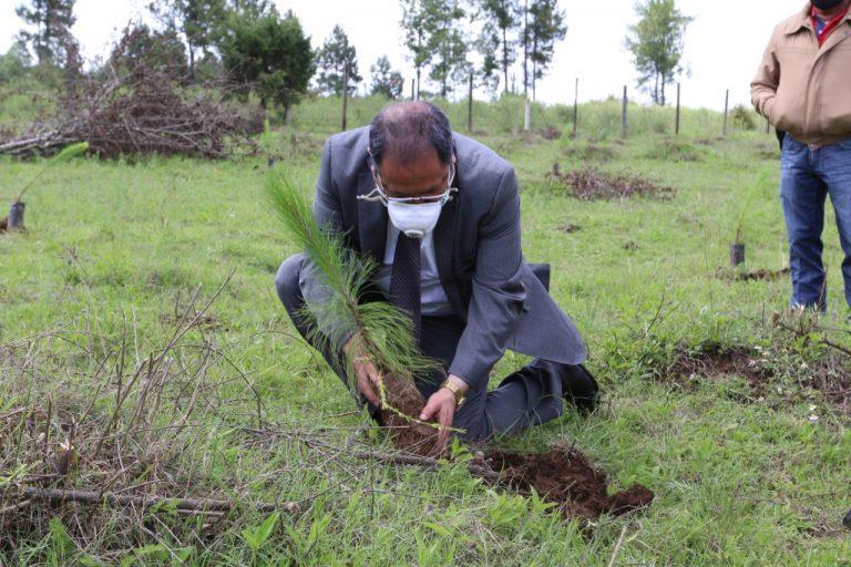 José Luis Téllez realizó de forma simbólica la plantación de 1,000 plantas de la especie pinus pseudostrubus