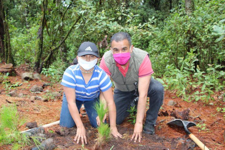 Plantan autoridades y ciudadanos, más de mil árboles en el Cerro Cacique