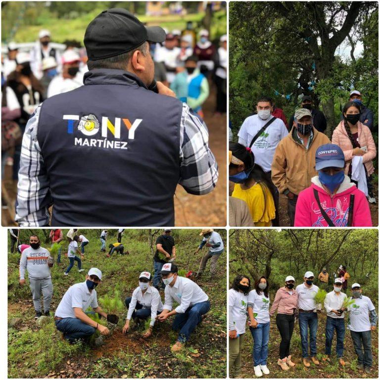 Tony Martínez participa en campaña de reforestación en Contepec