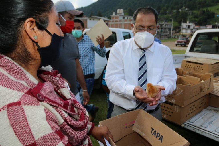 José Luis Téllez entregó de manera gratuita 2,000 pollos y pollas ponedoras a más de 200 familias de la Tenencia de San Bartolo Cuitareo.