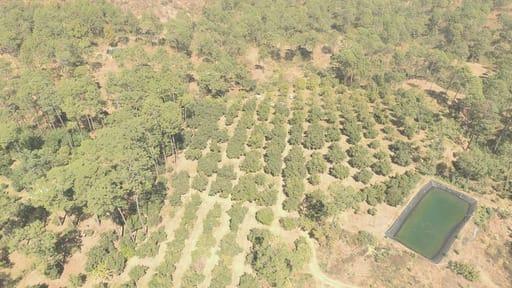 En cateo, asegura FGE predio por su posible relación en el delito de cambio de uso de suelo