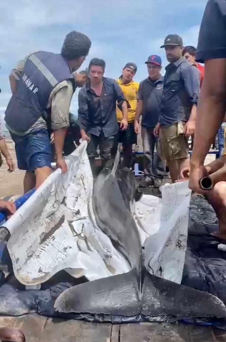 Rescatan a uno de dos delfines atrapados en dren de riego, trabajan por salvar al segundo.