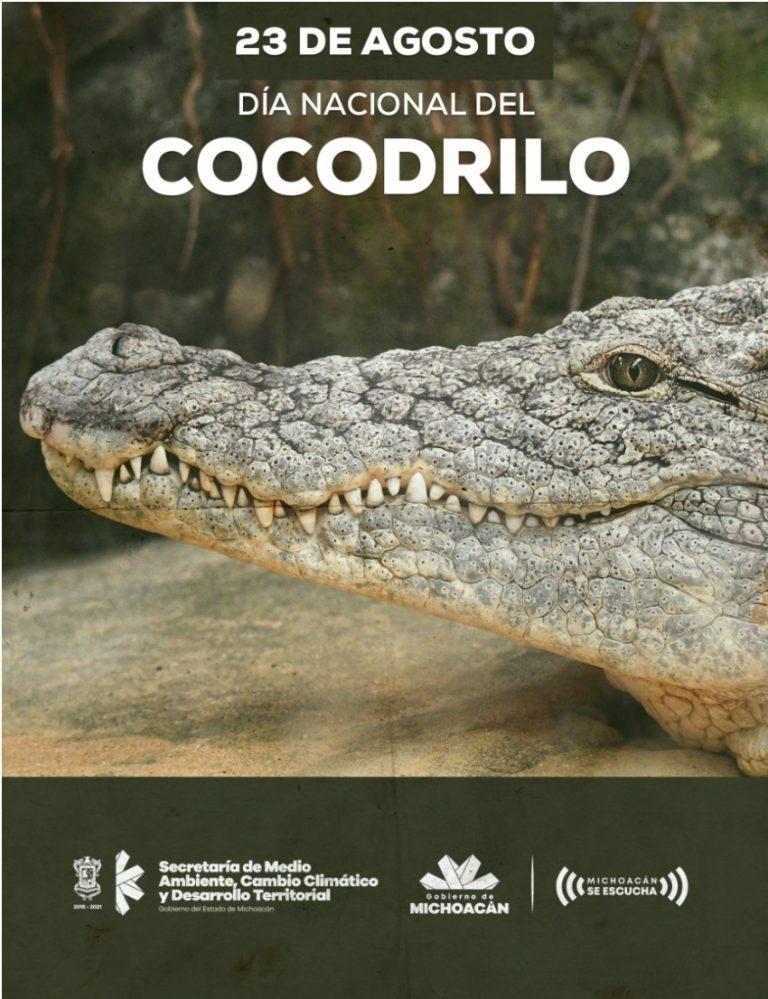 Michoacán, hogar del cocodrilo de río