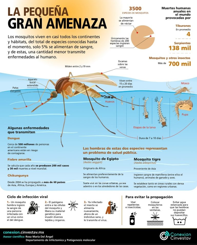 MOSQUITOS: PEQUEÑOS, FRÁGILES Y TRANSMISORES DE ENFERMEDADES